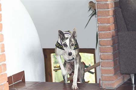 Adoptados Protectora El Cobijo Cañada Hermosa