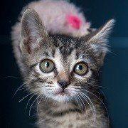 Mascotas en adopción, protectora El Cobijo