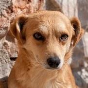 Adoptar un perro, protectora El Cobijo