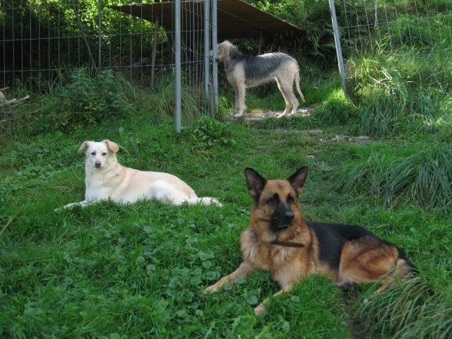 Adopciones Protectora El Cobijo Cañada Hermosa