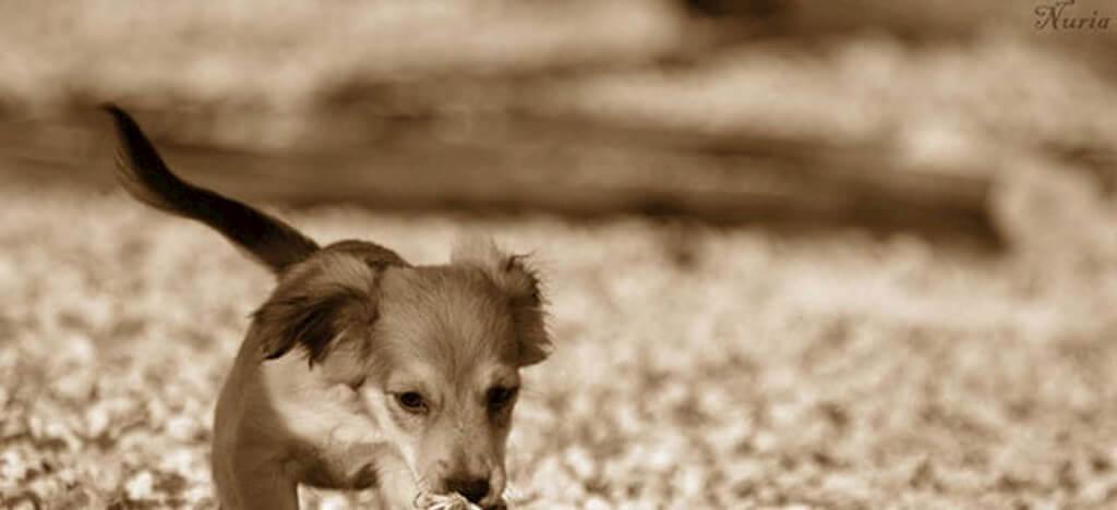 dog-slide2