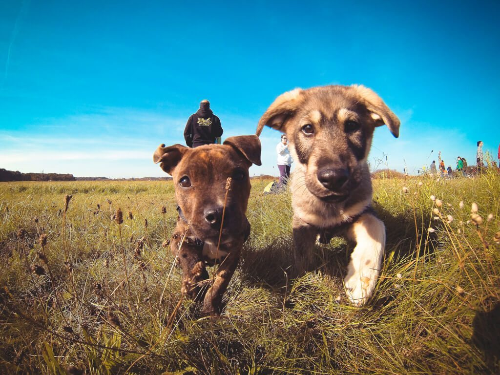 little-puppies-friends-picjumbo-com