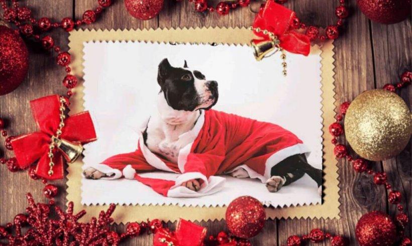 Feliz Navidad de nuestros adoptados!!!